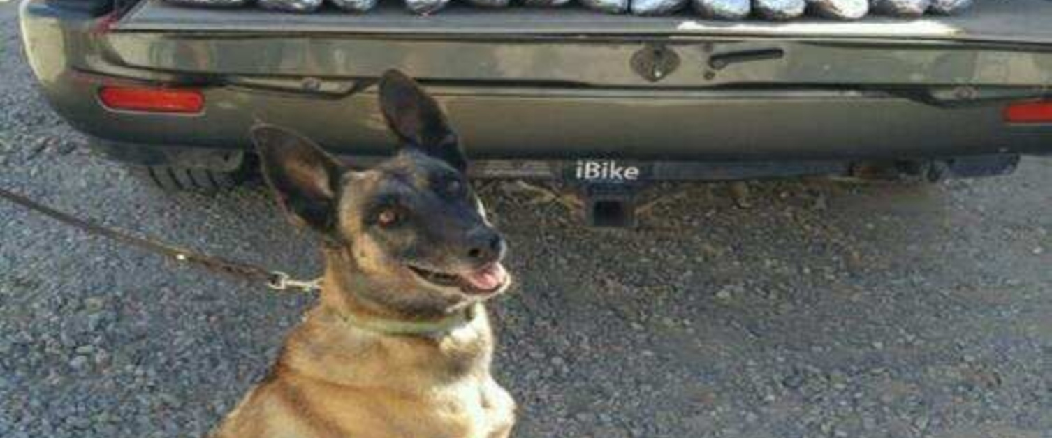 Border Patrol Dog to Retire after Sniffing Out 2.5 Tons of Drugs over Decade-Long Career